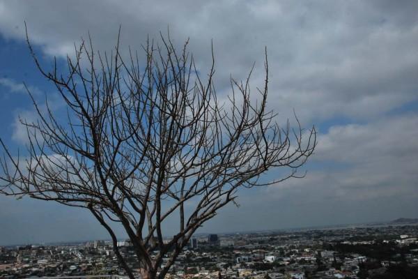 Guayaquil desde el mirador de Bellavista. A su costado un árbol de Palo Santo.