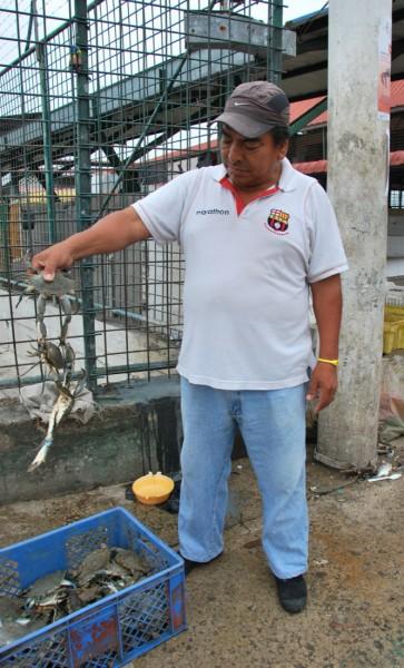 Enrique Robles muestra las jaibas que compra en la Caraguay. Este crustáceo reemplaza al cangrejo durante la veda.