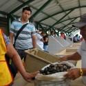 """La concha prieta se compra por """"pilo"""" y puede costar entre 20 y 70 centavos cada una. Unas 100 conchas se venden hasta en $16, dice Enrique Robles."""
