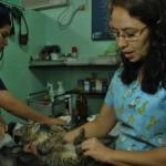 La veterinaria Carmen Lara atiende junto a Daniela Orrala, estudiante de veterinaria, a un gatito que fue lastimado.