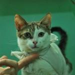 A Ojitos le encanta que lo vistan en el consultorio donde atiende la veterinaria Carmen Lara.