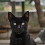 Uno de los gatos que es alimentado por voluntarios en un improvisado refugio de la ciudadela Las Acacias.