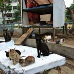 Varios gatos son alimentados por voluntarios en un improvisado refugio de la ciudadela Las Acacias.