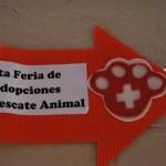 Durante la sexta feria de adopción de mascotas al menos 50 animales, entre gatos y perros, hallaron un hogar.