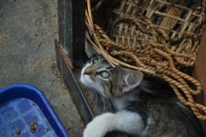 Un gato descansa en el albergue Amigos con cola.