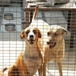 Dos de los canes que acogió Javier Cevallos en la Fundación Amigos con cola.
